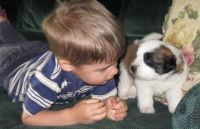 Santal Hound Puppies for sale in Huntington Beach, CA, USA. price: NA