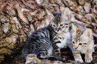 Savannah Cats for sale in Philadelphia, PA 19019, USA. price: NA