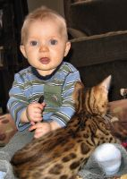 Savannah Cats for sale in Indianapolis Blvd, Hammond, IN, USA. price: NA