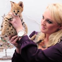 Savannah Cats for sale in Houston, TX, USA. price: NA
