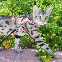 Savannah Cats for sale in Orange, CA, USA. price: NA