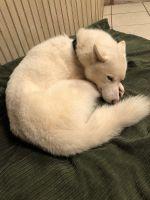 Shepherd Husky Puppies for sale in Tuscaloosa, AL, USA. price: NA