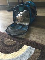 Shih-Poo Puppies for sale in Dallas, GA, USA. price: NA