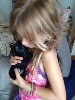 Shih-Poo Puppies for sale in Bonita Springs, FL 34135, USA. price: NA