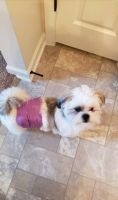 Shih Tzu Puppies for sale in Fayetteville, GA, USA. price: NA