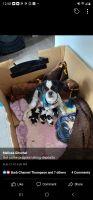 Shih Tzu Puppies for sale in Sidney, NE 69162, USA. price: NA
