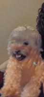 Shih Tzu Puppies for sale in Camden, NJ, USA. price: NA