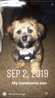 Shih Tzu Puppies for sale in Raytown, MO, USA. price: NA