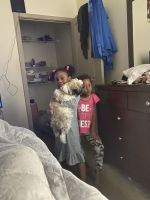 Shih Tzu Puppies for sale in Decatur, GA 30030, USA. price: NA