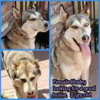 Siberian Husky Puppies for sale in Montclair, CA, USA. price: NA