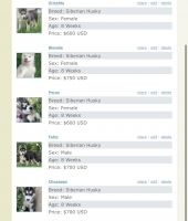 Siberian Husky Puppies for sale in Fontana, CA 92335, USA. price: NA