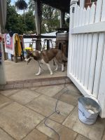 Siberian Husky Puppies for sale in Annville, PA 17003, USA. price: NA