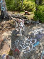 Siberian Husky Puppies for sale in Woburn, MA, USA. price: NA