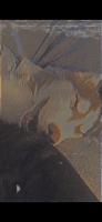 Siberian Husky Puppies for sale in Detroit, MI, USA. price: NA
