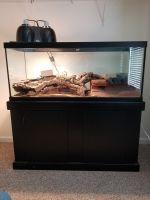 Skink Reptiles Photos