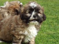 Smithfield Puppies Photos