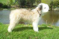 smithfield dog