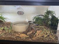 Snake Reptiles for sale in San Antonio, TX, USA. price: NA