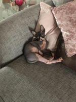 Sphynx Cats for sale in Houston, TX, USA. price: NA