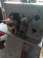 Sphynx Cats for sale in Cheyenne, WY, USA. price: NA