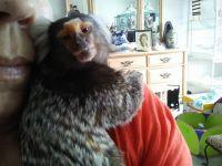 Squirrel Monkey Animals Photos