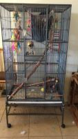 Sugar Glider Animals for sale in Chino Valley, AZ, USA. price: NA