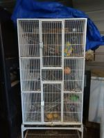 Sugar Glider Animals for sale in Wills Point, TX 75169, USA. price: NA