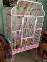Sugar Glider Animals for sale in Fort Worth, TX 76115, USA. price: NA