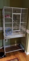 Sugar Glider Animals for sale in West Jefferson, NC 28694, USA. price: NA