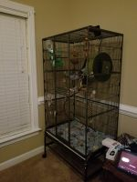 Sugar Glider Animals for sale in Winterville, NC, USA. price: NA