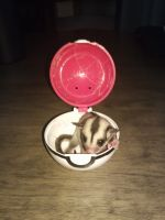 Sugar Glider Animals for sale in 412 E William Cannon Dr, Austin, TX 78744, USA. price: NA