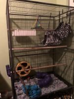 Sugar Glider Animals for sale in O'Fallon, MO, USA. price: NA