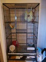 Sugar Glider Animals for sale in Davenport, IA, USA. price: NA