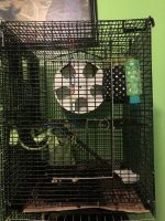Sugar Glider Animals for sale in Muncie, IN, USA. price: NA