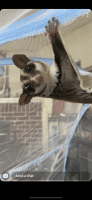 Sugar Glider Animals for sale in 1500 Lawnmont Dr, Round Rock, TX 78664, USA. price: NA