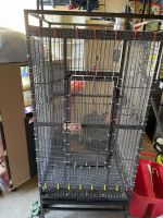 Sugar Glider Animals for sale in Vienna, VA 22180, USA. price: NA