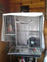 Sugar Glider Animals for sale in Granby, CO 80446, USA. price: NA