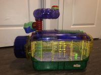 Syrian Hamster Rodents for sale in Stillwater, OK, USA. price: NA