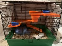 Syrian Hamster Rodents for sale in Bridgeport, CT, USA. price: NA