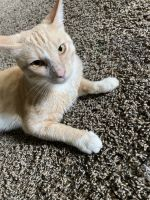 Tabby Cats for sale in Montpelier, MD 20708, USA. price: NA
