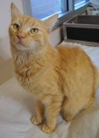Tabby Cats for sale in Carlsbad, CA, USA. price: NA