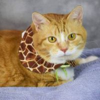 Tabby Cats for sale in Marbury, MD 20658, USA. price: NA