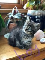Tabby Cats Photos