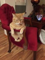 Tabby Cats for sale in Oregon City, OR 97045, USA. price: NA