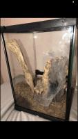 Tarantula Animals for sale in New Orleans, LA, USA. price: NA