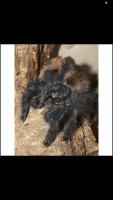 Tarantula Animals Photos