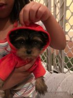 Tea Cup Chihuahua Puppies for sale in Suwanee, GA 30024, USA. price: NA