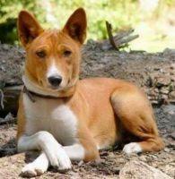 telomian dog