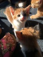 Tiger Cat Cats Photos