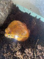 Toad Amphibians Photos